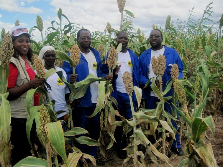 Food security in Zimbabwe