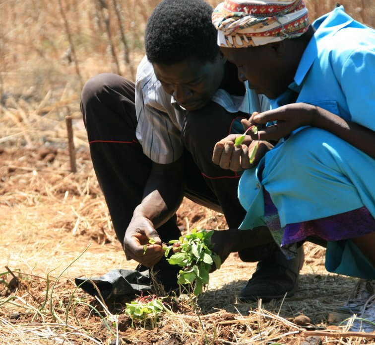 Secure the nutrition of small farmers and their families