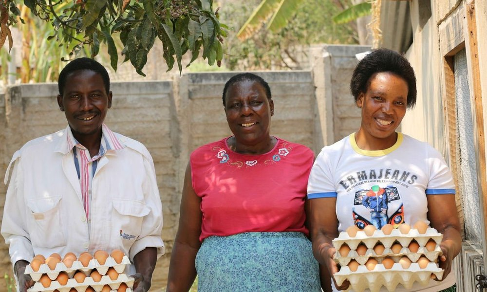 Livelihood protection due to chicken farming and egg sales in Zimbabwe